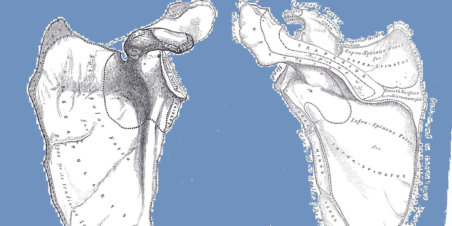 Anna Shawcross osteopathy